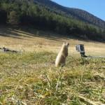 marmotte gopro