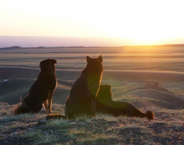 levé soleil avec chiens
