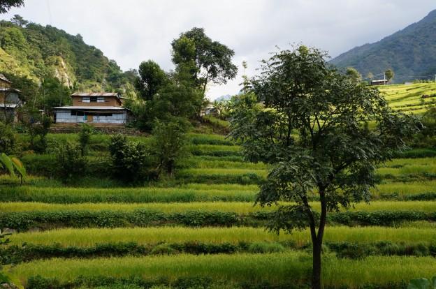 11 village rizière
