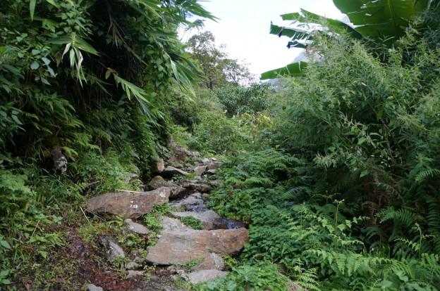 16 jungle