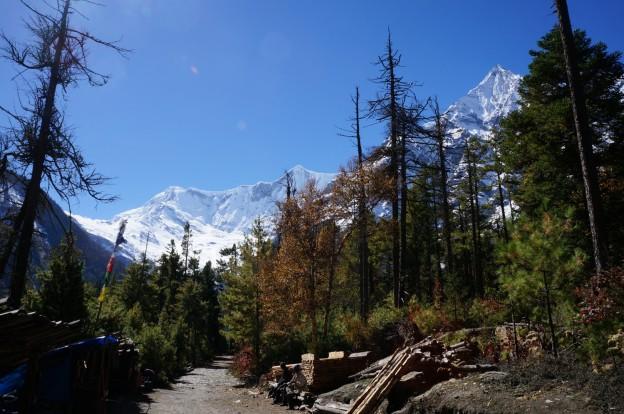 27 forêt montagnes