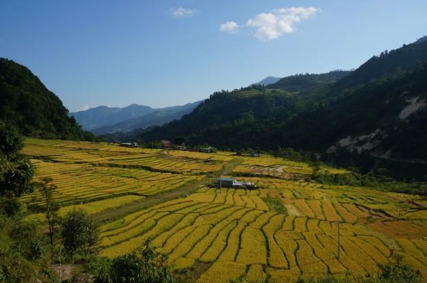 7 rizières