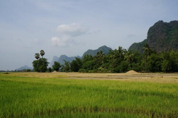paysage riziere