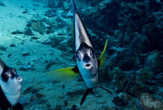 poisson qui me regarde