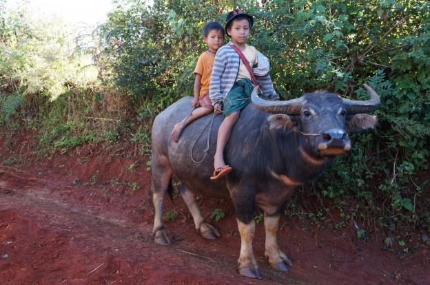 trek inle cowboys