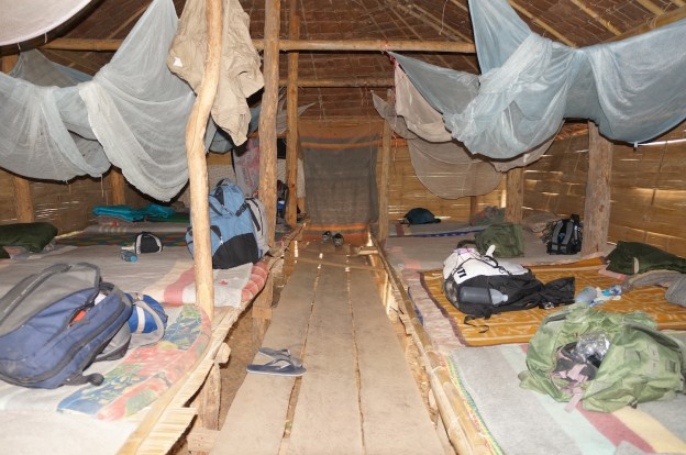 camp jungle