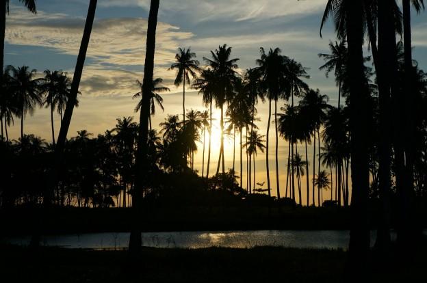 couché soleil palmiers