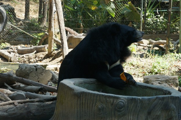 kuang si ours 1