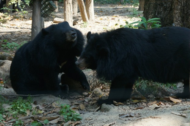 kuang si ours 2