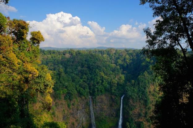 jungle cascade