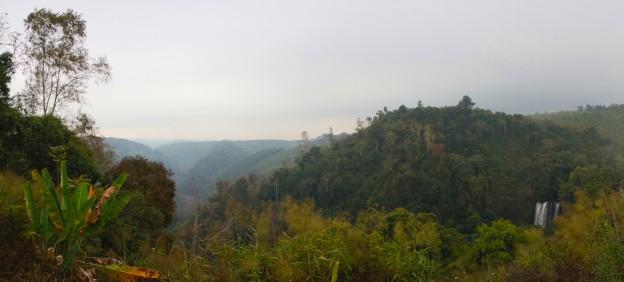 pano jungle