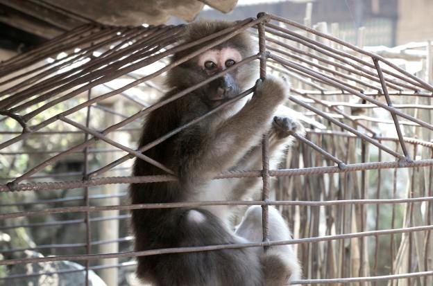 singe cage