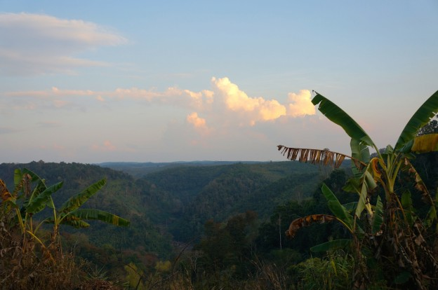 vue jungle