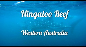 La plongée à Ningaloo Reef