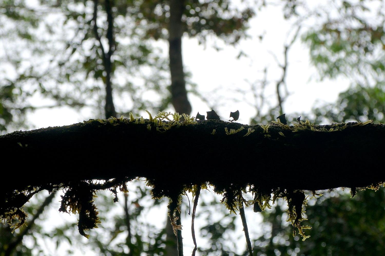 fourmis branche