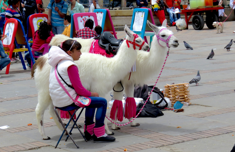 place bolivar lama