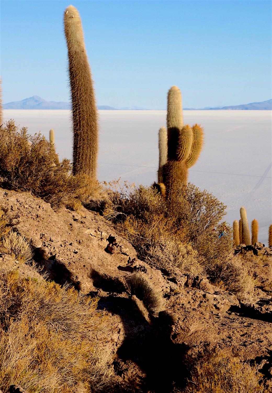 cactus priere
