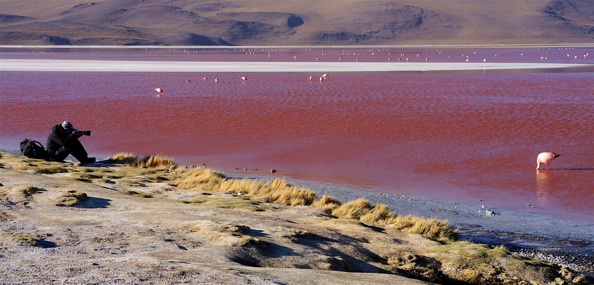 laguna colorada jonas flamand