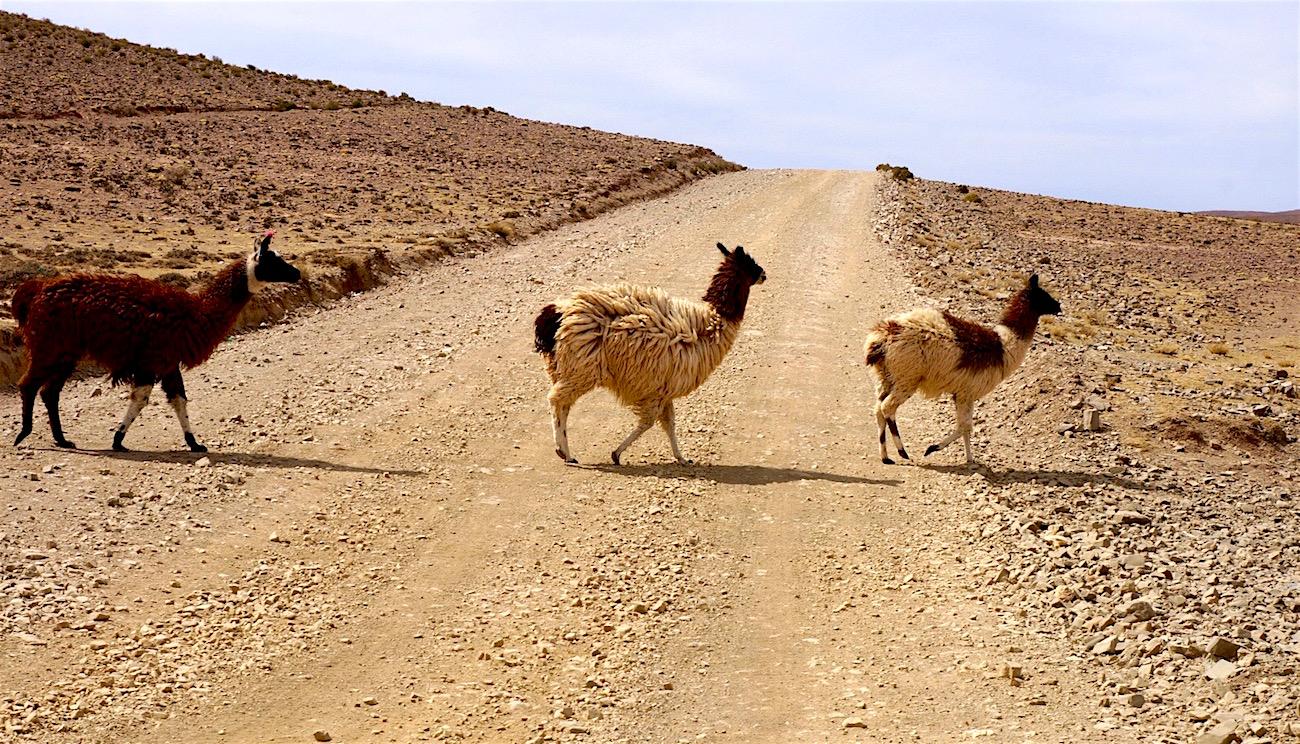 lamas route